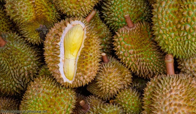 Davao's Durian