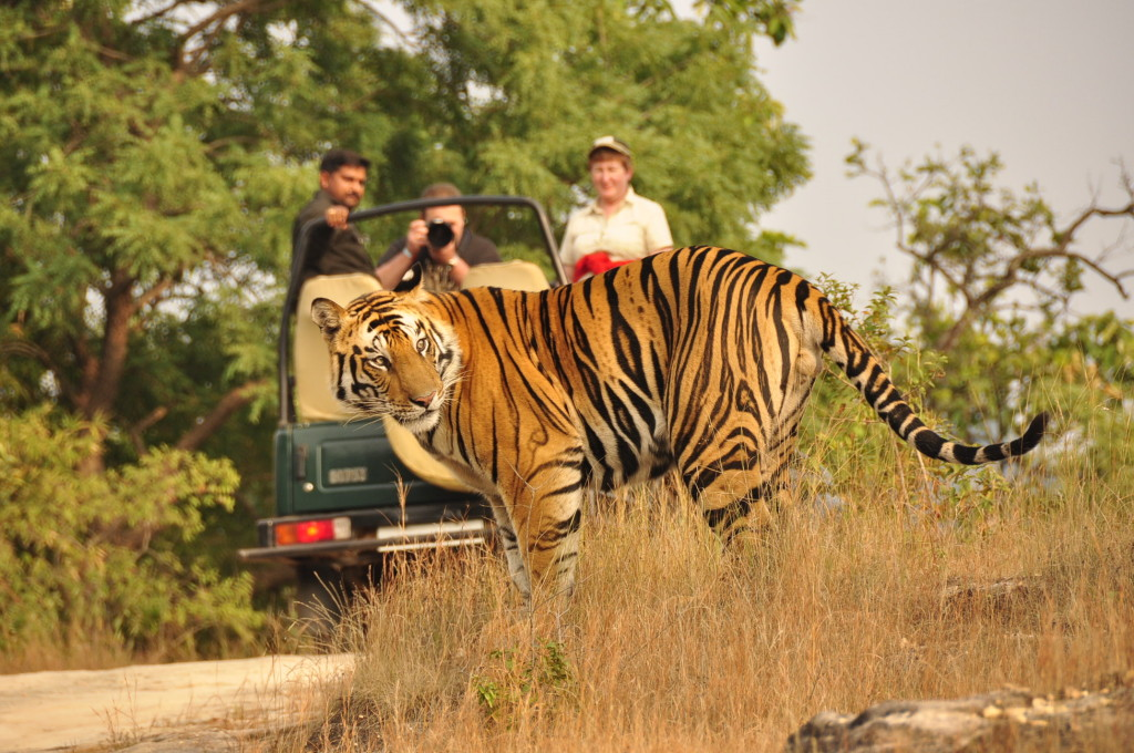 National Parks to visit in Rajasthan