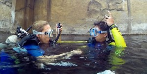 PADI Scuba Diver courses