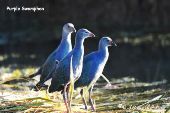 Sichuan birding trip